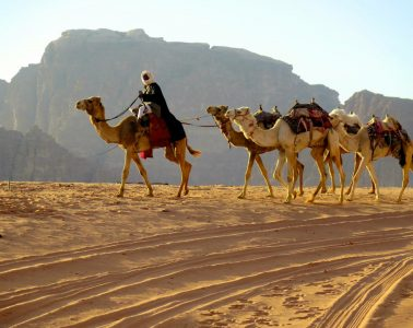 Bedouin with his camels, wandering in the Wadi Rum desert. Photo by Victoria Thorsen.