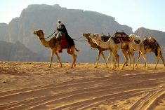 Bedouins – the backbone of Jordanian culture